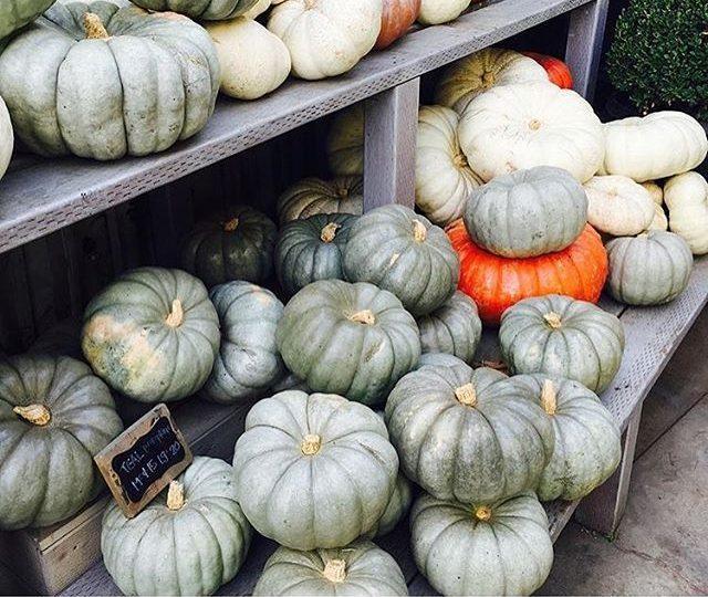 Hands down, my favorite time of year #fallinlosangeles #inspiration #pumpkincity #rollinggreens #alexisjewelry